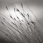 Prairie Grass by Pardus