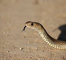 Brown Snake by adamisalive