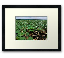 Blanket of Water Chestnuts in the Hudson River Framed Print