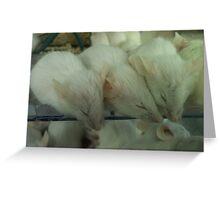 White Mice Greeting Card