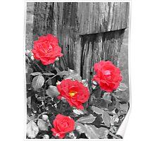 Wild Irish Roses? Poster