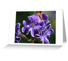 Close up of a purple flower  Greeting Card