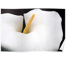 Lily of Kew 2 Poster