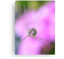 Dandelion bubble Canvas Print