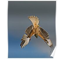 Red Kite Diving Poster