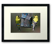 Springtime Competition Framed Print