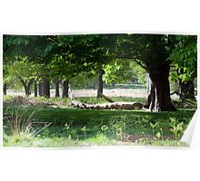 Spring Wood Poster