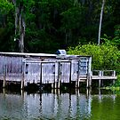 Along the St. Johns River by caroleann1947