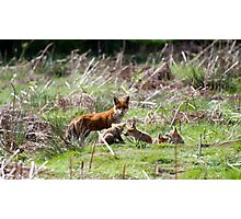 Fox Family Photographic Print