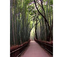Bamboo Breathtaking Photographic Print