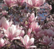 Magnolias Sticker
