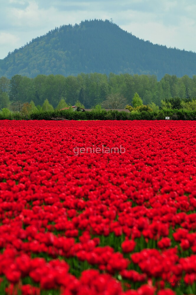 Sea of Red by genielamb