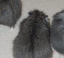 Little Charcoal Grey Dwarf Hamsters Sticker