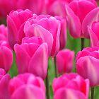 Pink Beauty by genielamb