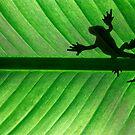 Green gecko  by Etienne RUGGERI Artwork