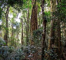 the gondwana rainforest by FatBurns