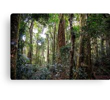 the gondwana rainforest Canvas Print