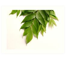 Curry Leaves Art Print