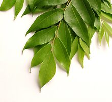 Curry Leaves by AravindTeki