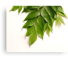 Curry Leaves Canvas Print