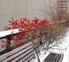 Red berries on the High Line by jenmcgillan