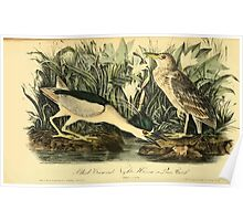 James Audubon Vector Rebuild - The Birds of America - From Drawings Made in the United States and Their Territories V 1-7 1840 - Black Crowned Night Heron or Qua Bird Poster