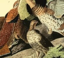 James Audubon Vector Rebuild - The Birds of America - From Drawings Made in the United States and Their Territories V 1-7 1840 - Ruffed Grouse Sticker