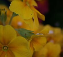Spring Yellow by Sarah Howlett