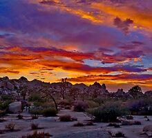 Joshua Tree Sunset 2 by photosbyflood