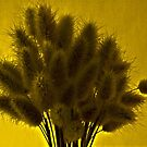 Bunny Tail Grasses by Sandra Foster