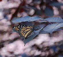 Millennium Monarch by rabeeker