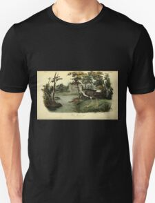 James Audubon Vector Rebuild - The Birds of America - From Drawings Made in the United States and Their Territories V 1-7 1840 - Yellow Shanks Snipe T-Shirt