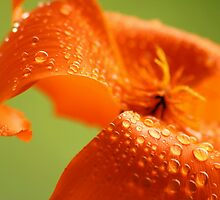 Tangerine Dream by Ingz