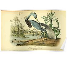 James Audubon Vector Rebuild - The Birds of America - From Drawings Made in the United States and Their Territories V 1-7 1840 - Louisiana Heron Poster