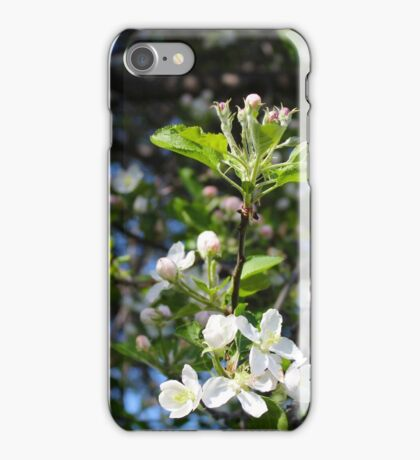 Apple Blossoms 2 iPhone Case/Skin