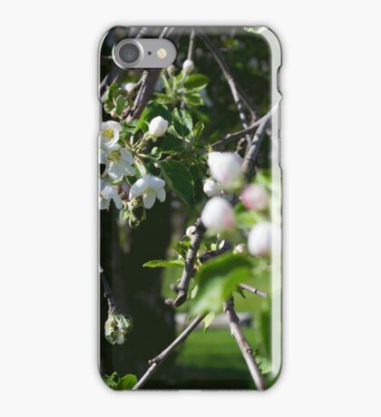 Apple Blossoms 3 iPhone Case/Skin