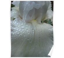 April wedding Dress iris Poster