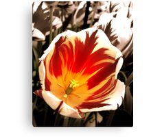 Tiger Tulips Canvas Print