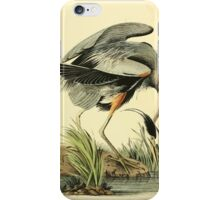 James Audubon Vector Rebuild - The Birds of America - From Drawings Made in the United States and Their Territories V 1-7 1840 - Great Blue Heron iPhone Case/Skin