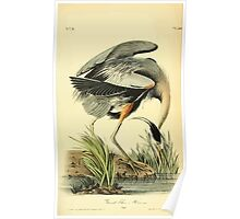 James Audubon Vector Rebuild - The Birds of America - From Drawings Made in the United States and Their Territories V 1-7 1840 - Great Blue Heron Poster