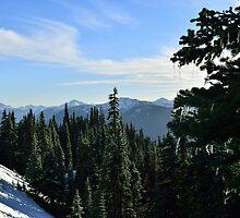 Hurricane Ridge, Olympic National Park, Clallam County, Washington, USA by Mike Kunes