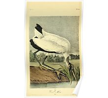 James Audubon Vector Rebuild - The Birds of America - From Drawings Made in the United States and Their Territories V 1-7 1840 - Wood Ibis Poster