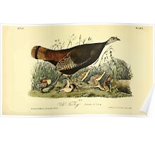 James Audubon Vector Rebuild - The Birds of America - From Drawings Made in the United States and Their Territories V 1-7 1840 - Wild Turkey Young Poster