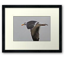 Seagull I Framed Print