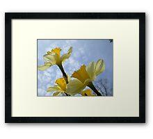 Daffodils & Sky Framed Print