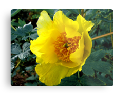 Golden Tree Paeony Metal Print