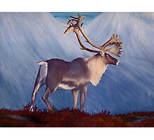 The Caribou Photographic Print