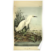 James Audubon Vector Rebuild - The Birds of America - From Drawings Made in the United States and Their Territories V 1-7 1840 - Snowy Heron Poster