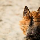 On Alert at the Beach by Tiffany Dryburgh