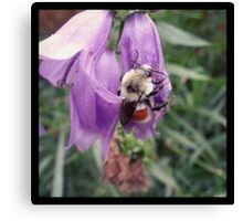 Joltography: Bumble Bee Canvas Print
